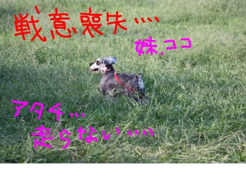 snap_baron20101214_2012104231135.jpg