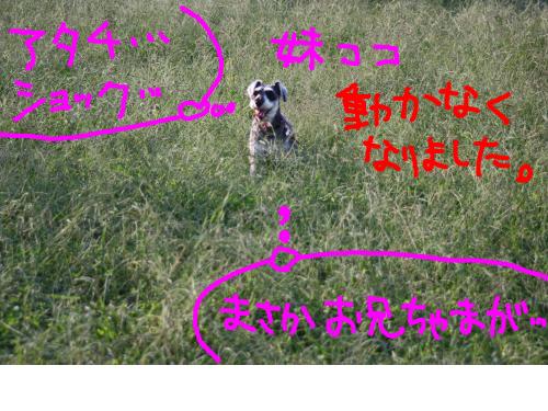 snap_baron20101214_2012104232852.jpg