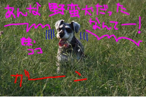 snap_baron20101214_201210423439.jpg