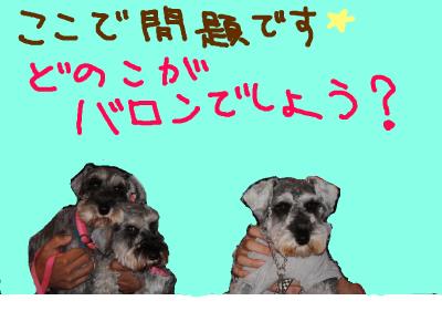 snap_baron20101214_2012110111514.jpg