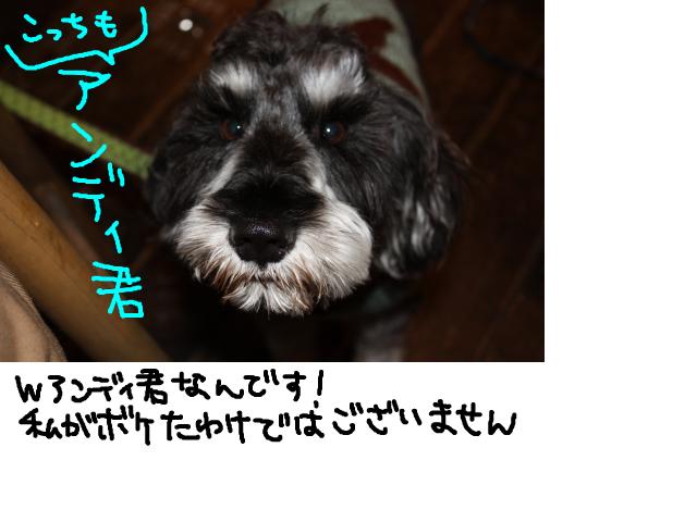 snap_baron20101214_2012110114524.jpg