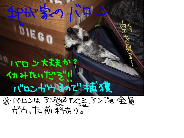 snap_baron20101214_2012110115056.jpg