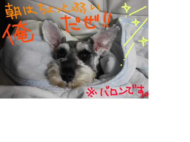 snap_baron20101214_2012114221734.jpg