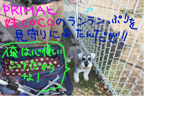 snap_baron20101214_2012114223921.jpg