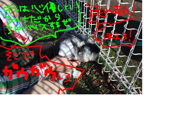 snap_baron20101214_2012114225549.jpg