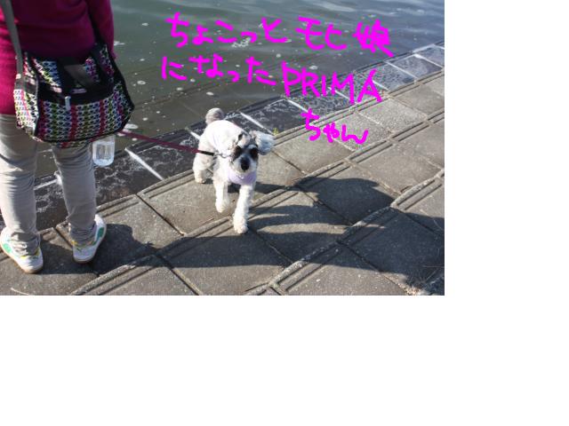 snap_baron20101214_2012114232559.jpg