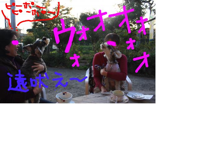 snap_baron20101214_201211423511.jpg
