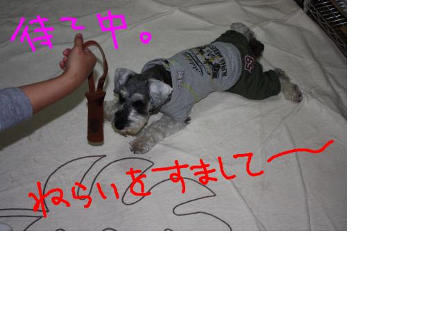 snap_baron20101214_20121150318.jpg
