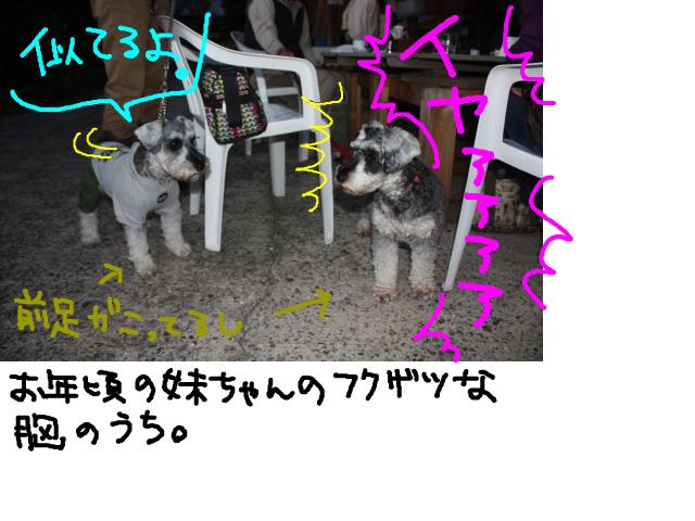 snap_baron20101214_201211582656.jpg