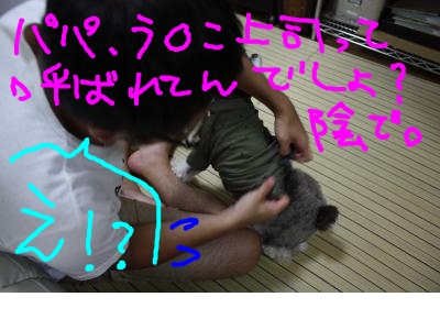 snap_baron20101214_201291213456.jpg