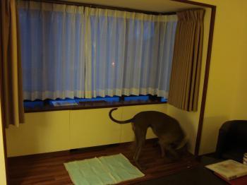 Woof_room2.jpg