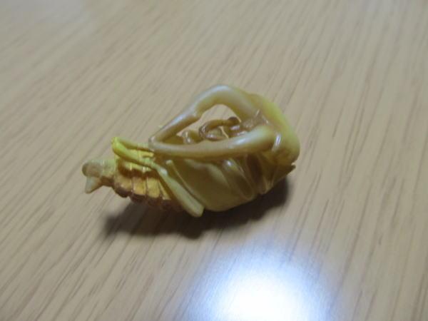 カプセルQ(蛹)