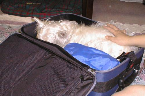 suitcasenihairuyatu1.jpg