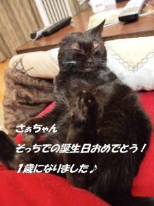 20120513saku.jpg