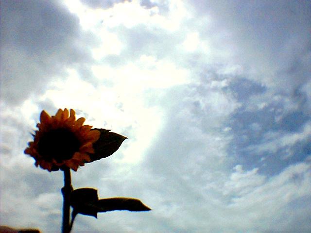 Photo007.jpg