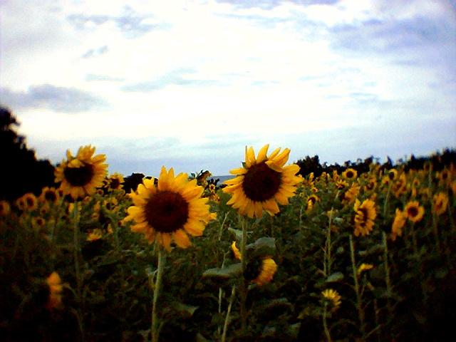 Photo014.jpg