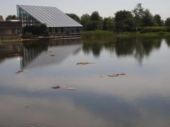 オオオニバス池