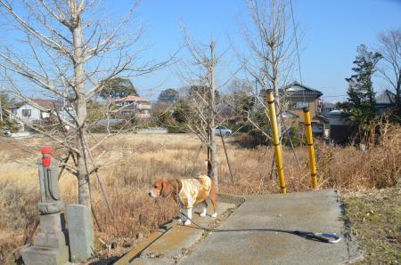 20140124布鎌小学校東分光04