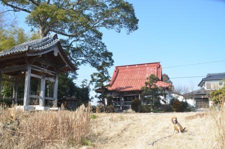 20140124布鎌小学校東分光13