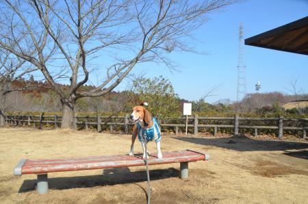 20140128四街道総合公園08
