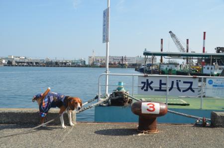 20140201清水漁港13