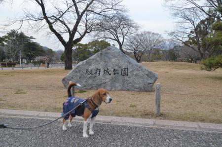 20140201駿府城址25