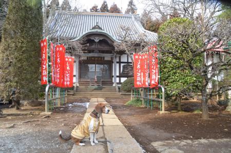 20140206しろい七福神④長楽寺02