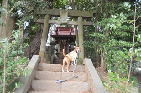 20140206大日神社10