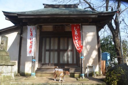 20140206しろい七福神⑥秋本寺04