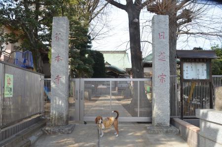20140206しろい七福神⑥秋本寺01