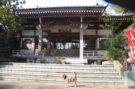 20140206しろい七福神⑦薬王寺05