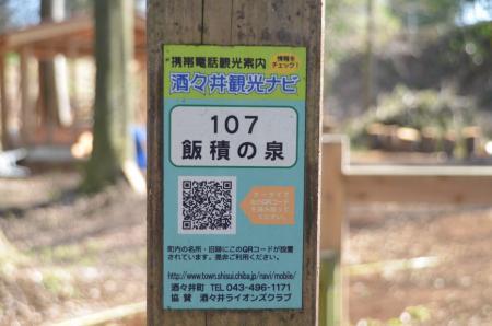 20140207i飯積の大杉12