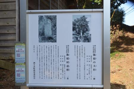 20140207i飯積の大杉10