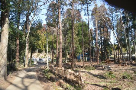 20140207i飯積の大杉15