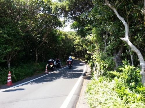 足摺緑の道