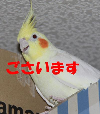 4_ございます