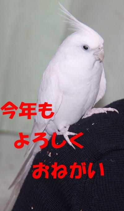 5_お願い