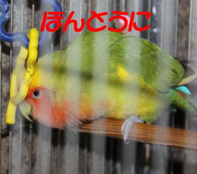 2_リコ1