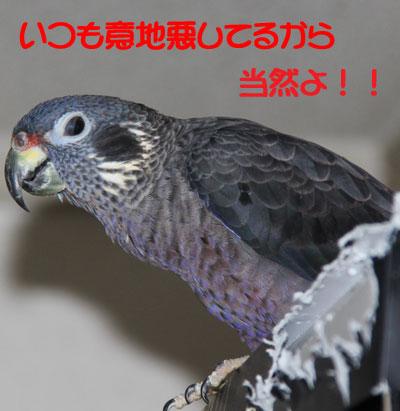 7_ビオレットお怒り