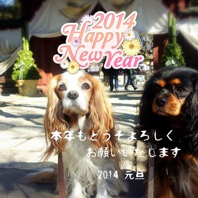 2013-12-31-10-14-15_deco.jpg