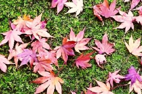 京都 大河内山荘庭園の紅葉19