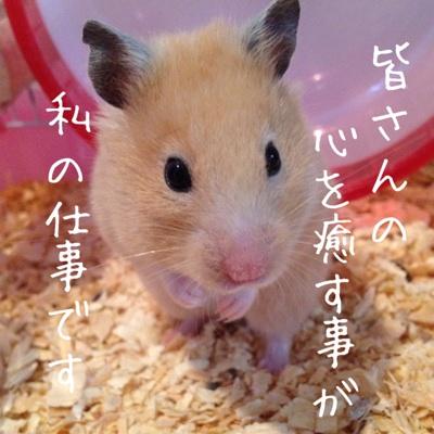 fc2blog_201206171123425af.jpg