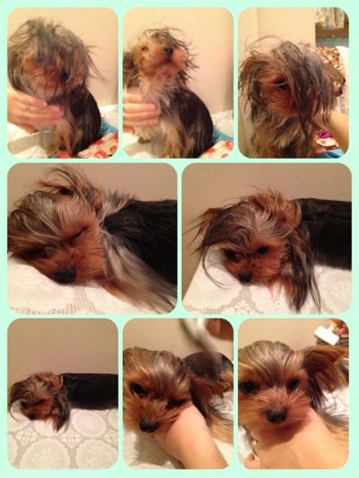 fc2blog_20121111200001ffe.jpg
