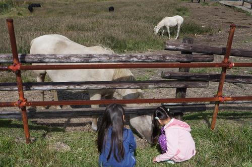 次女三女と馬