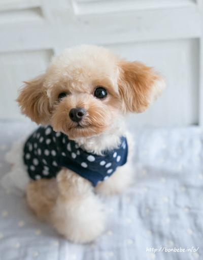 犬服 ワンピース