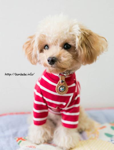 犬服 ハンドメイド リメイク