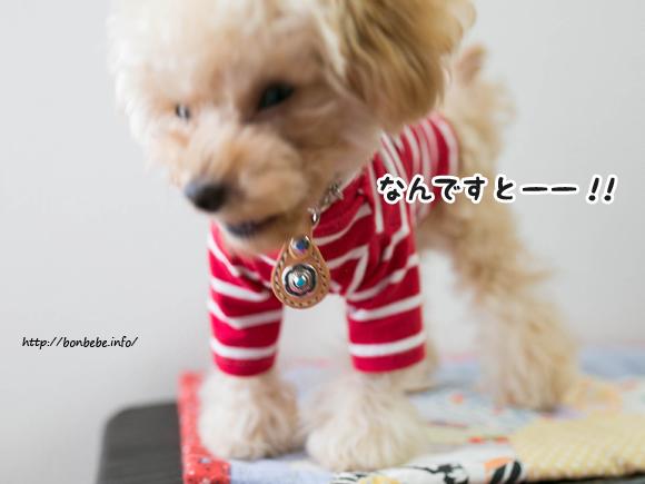 犬服 ハンドメイド ボーダー