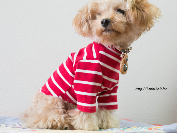 犬服 ハンドメイド タートル