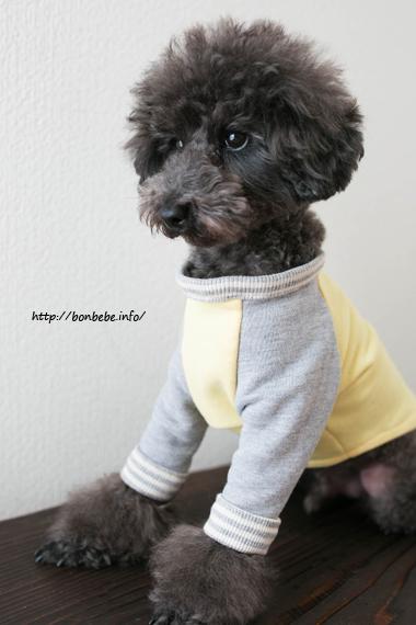 犬服 ベースボールTシャツ