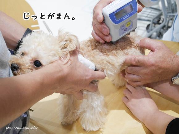 犬の体脂肪率 測定